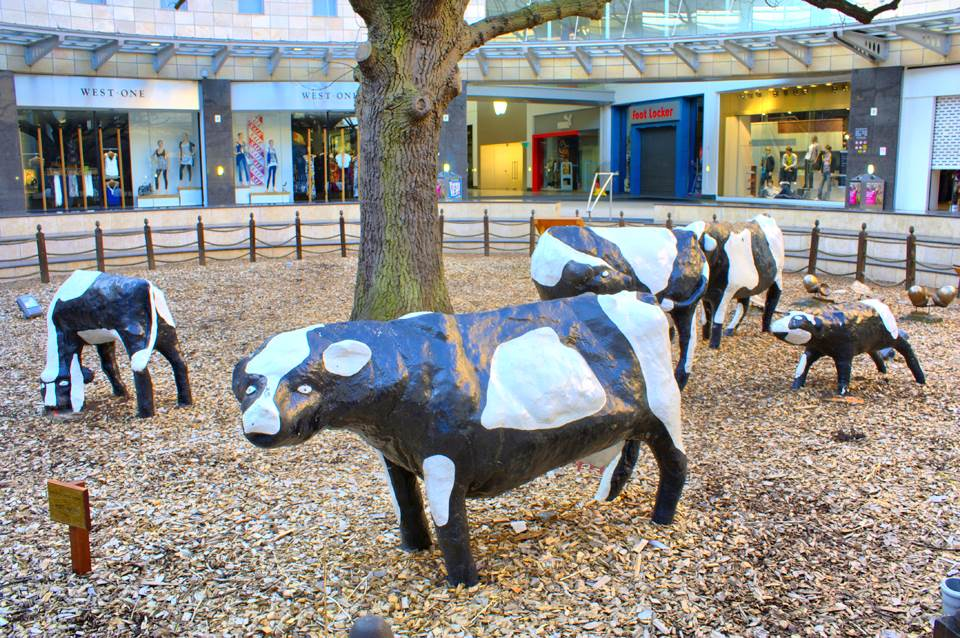 Concrete Cows MSP