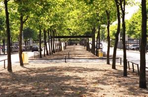 Treelined Boulevards